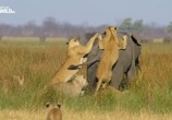 Сцена из фильма Слон: Король Калахари / Elephant. King of the Kalahari (2016) Слон: Король Калахари сцена 4