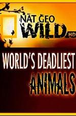 National Geographic: Самые опасные животные мира