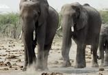 Сцена из фильма Слон: Король Калахари / Elephant. King of the Kalahari (2016) Слон: Король Калахари сцена 1