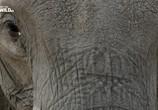 Сцена из фильма Слон: Король Калахари / Elephant. King of the Kalahari (2016) Слон: Король Калахари сцена 2