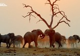 Сцена из фильма Слон: Король Калахари / Elephant. King of the Kalahari (2016) Слон: Король Калахари сцена 3