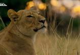 Сцена из фильма Слон: Король Калахари / Elephant. King of the Kalahari (2016) Слон: Король Калахари сцена 5