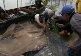 Сцена из фильма Discovery Channel: Animal Planet: Речные монстры / River monsters (2009) Discovery Channel: Animal Planet: Речные монстры сцена 4