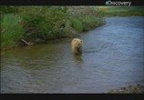 Сцена из фильма Discovery: Animal Planet: Речные монстры. Ужас Аляски / River monsters. Alaskan Horror (2011) Discovery: Animal Planet: Речные монстры. Ужас Аляски сцена 2