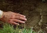 Сцена из фильма Медведь / L'ours (1988) Медведь