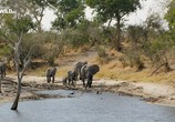 Сцена из фильма Слон: Король Калахари / Elephant. King of the Kalahari (2016) Слон: Король Калахари сцена 6